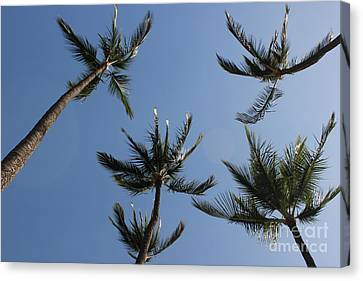 Canvas Print featuring the photograph Palm Trees by Wilko Van de Kamp