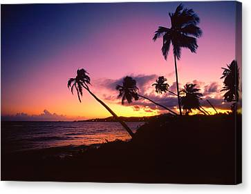 Palmas Del Mar Sunset Puerto Rico Canvas Print by George Oze