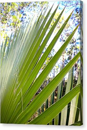 Canvas Print featuring the painting Palmetto 1 by Renate Nadi Wesley