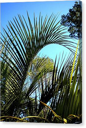 Canvas Print featuring the painting Palmetto 2 by Renate Nadi Wesley