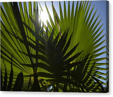Canvas Print featuring the photograph Palmetto 3 by Renate Nadi Wesley