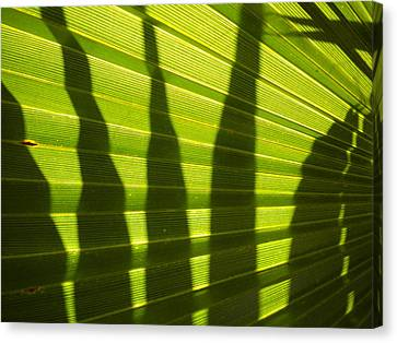 Canvas Print featuring the photograph Palmetto 4 by Renate Nadi Wesley