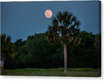 Canvas Print featuring the photograph Palmetto Full Moon by RC Pics
