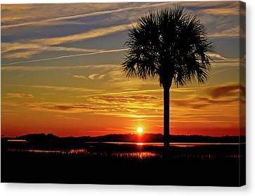 Palmetto Sunset  Canvas Print by Bonnes Eyes Fine Art Photography