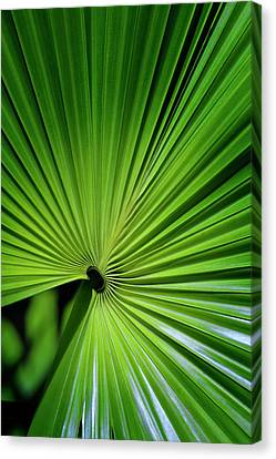 Palmgreen Canvas Print by Al Hurley