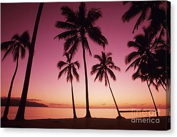 Palms Against Pink Sunset Canvas Print by Carl Shaneff - Printscapes