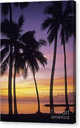 Palms Against Sunset Sky Canvas Print by Carl Shaneff - Printscapes