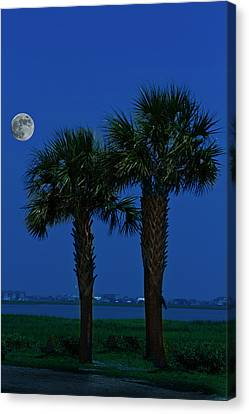Canvas Print featuring the photograph Palms And Moon At Morse Park by Bill Barber
