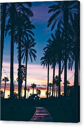Litchfield County Canvas Print - Palms At Sunset by Mountain Dreams