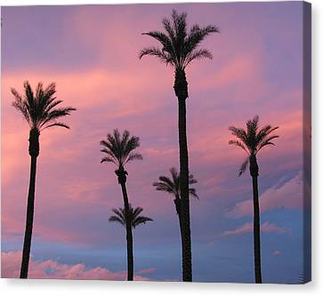 Canvas Print featuring the photograph Palms At Sunset by Phyllis Kaltenbach
