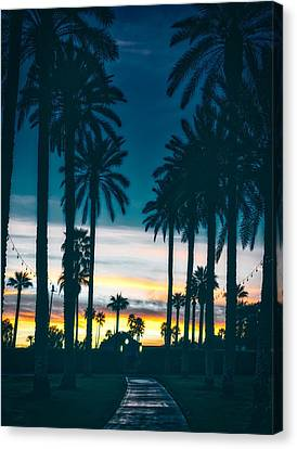 Litchfield County Canvas Print - Palms At Twilight by Mountain Dreams