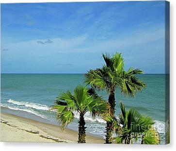 Palms At Vero Beach Canvas Print