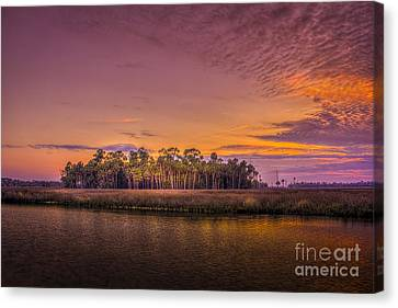 Palms Delight Canvas Print by Marvin Spates