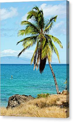 Canvas Print featuring the photograph Palms On Hawaiian Beach 12 by Micah May