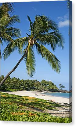 Palms Over Beach Canvas Print by Ron Dahlquist - Printscapes