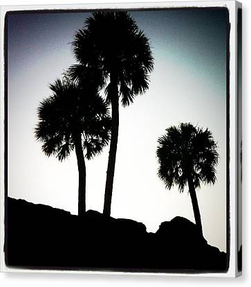 #palmtrees #staugastine #fort #trees Canvas Print by Kendall Tabor