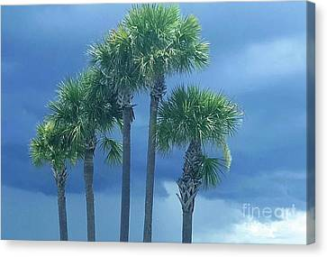 Palmy Skies Canvas Print by Rachel Hannah