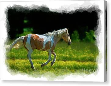 Palomino Galloping In Field Canvas Print by Dan Friend