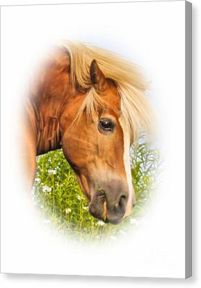 Canvas Print featuring the photograph Palomino Head by Debbie Stahre