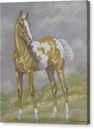 Palomino Paint Foal Canvas Print by Dorothy Coatsworth