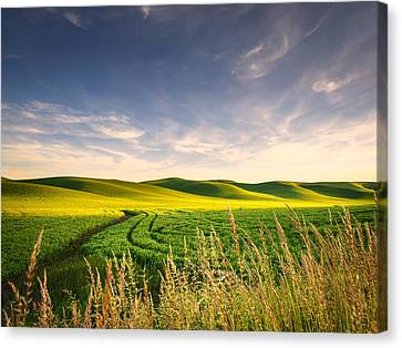 Canvas Print featuring the photograph Palouse Bounty by Dan Mihai