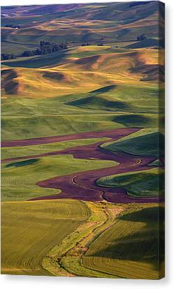 Palouse Hills Canvas Print by Mike  Dawson