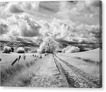 Palouse Road And Tree Ir 0996 Canvas Print
