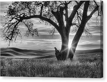 Sun Rays Canvas Print - Palouse Sentinel - Black And White by Mark Kiver
