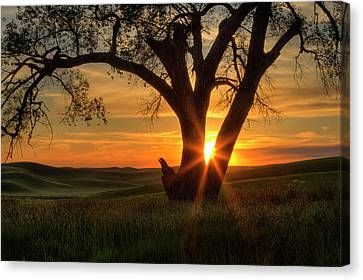Palouse Sentinel Canvas Print by Mark Kiver