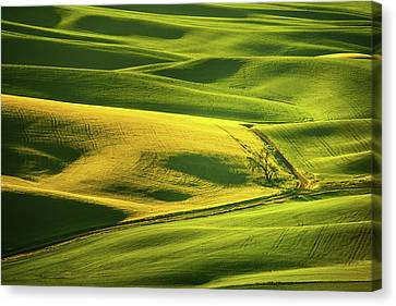 Canvas Print featuring the photograph Palouse Shades Of Green by Dan Mihai