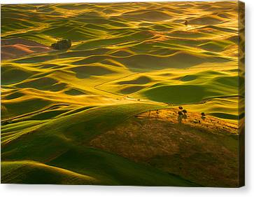 Canvas Print featuring the photograph Palouse Swells by Dan Mihai