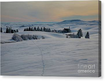 Palouse Tracks Canvas Print by Idaho Scenic Images Linda Lantzy
