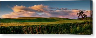 Canvas Print featuring the photograph Palouse Tree Of Life by Dan Mihai