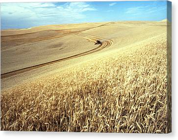 Palouse Wheat Canvas Print by USDA and Photo Researchers