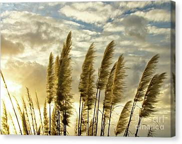 Pampas Grass Canvas Print