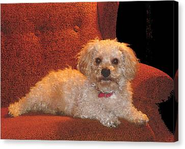 Canvas Print featuring the photograph Pampered Pooch  by Margie Avellino