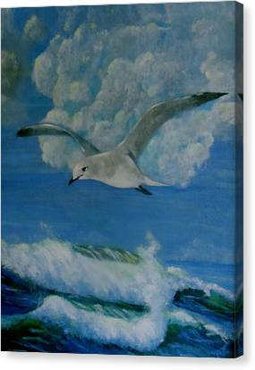 Panama City Seagull Canvas Print