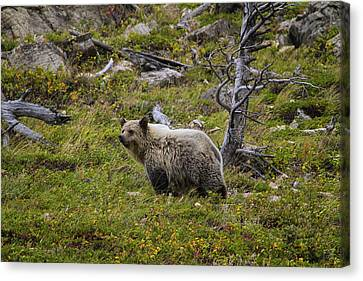Panda In Many Glacier Canvas Print by Mark Kiver