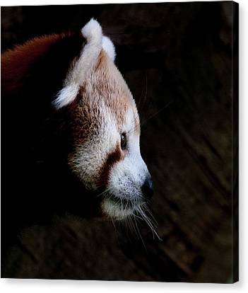 Panda Profile Canvas Print by Heather Thorning