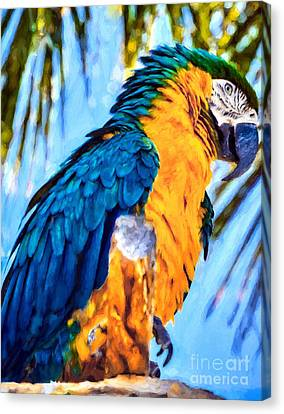 Blue And Gold Macaw Canvas Print - Panhandle Parrot by Mel Steinhauer