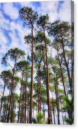 Pine Needles Canvas Print - Panhandle Pines by Mel Steinhauer