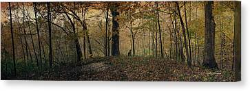 Panorama 2015 Autumn In The Woods Textured Canvas Print by Thomas Woolworth