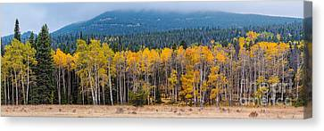 Panorama Of Changing Aspens At Rocky Mountain National Park - Estes Park Colorado Canvas Print by Silvio Ligutti