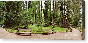 Panorama Of Muir Woods National Monument Boardwalk - Marin County California Canvas Print by Silvio Ligutti