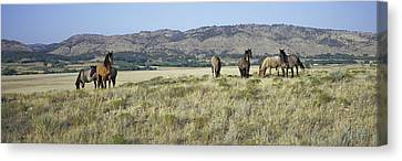 Panoramic Image Of Wild Horses Of Black Canvas Print by Panoramic Images
