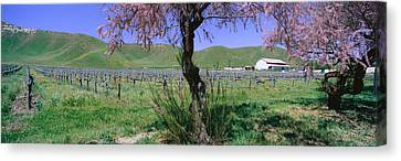 Panoramic View Of Golden California Canvas Print by Panoramic Images