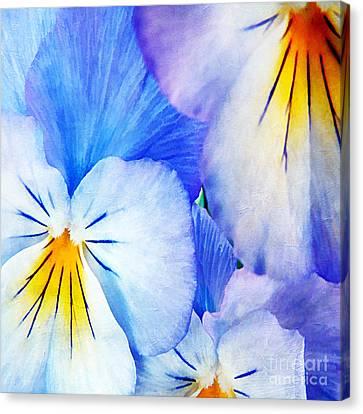 Pansies In Blue Tones Canvas Print