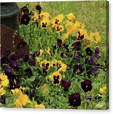 Canvas Print featuring the photograph Pansies by Kim Henderson