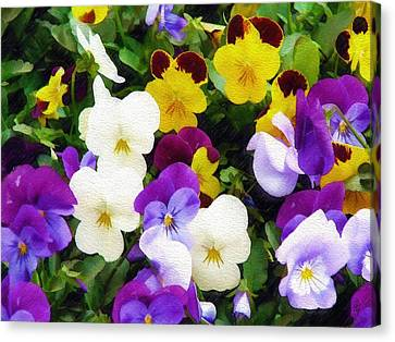 Canvas Print featuring the photograph Pansies by Sandy MacGowan
