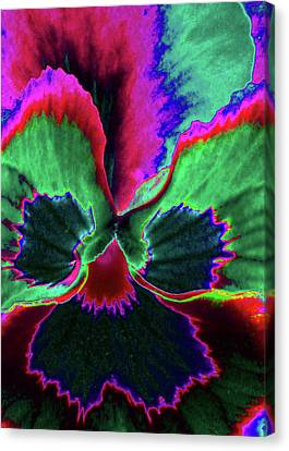 Pansy 10 - Photopower - Thoughts Of You Canvas Print